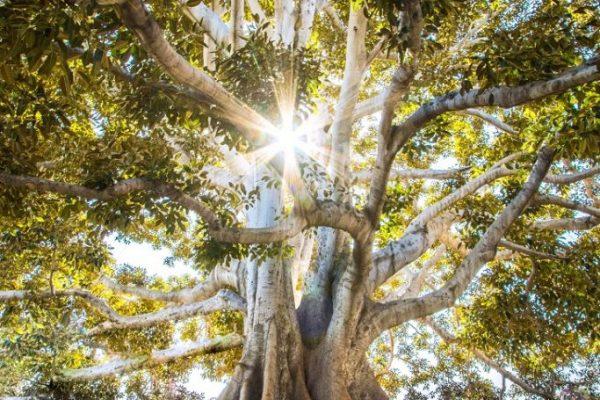 60e25242d7e1e695b7f103f8_racines-arbres-683x1024